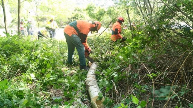 attrezzature forestali 1
